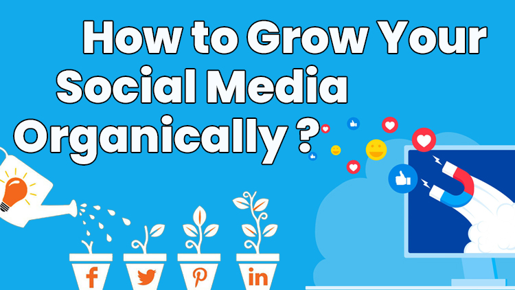 How to grow your SM